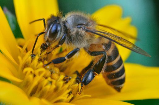 10 facts about Honey bees! | National Geographic Kids