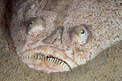 Unknown Creatures Found 2014