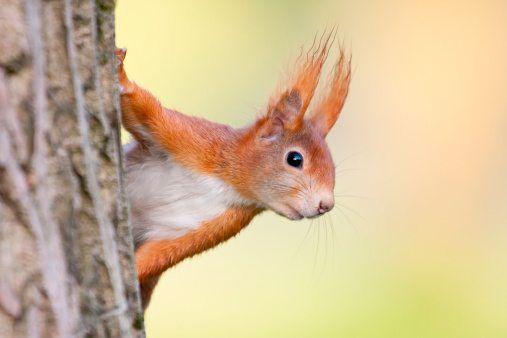 autumn animals squirrel