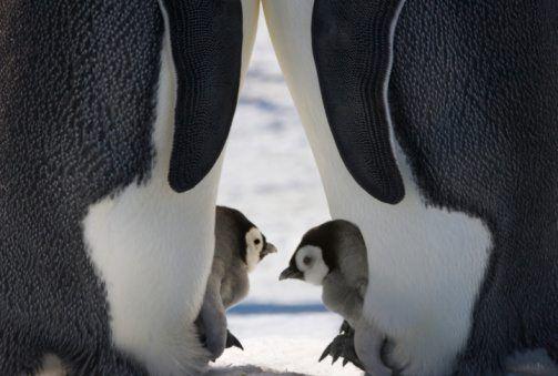 「penguins」の画像検索結果