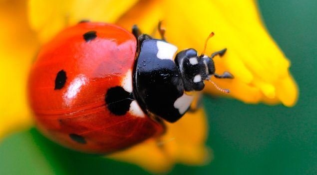 25 Cool Facts About Bugs National