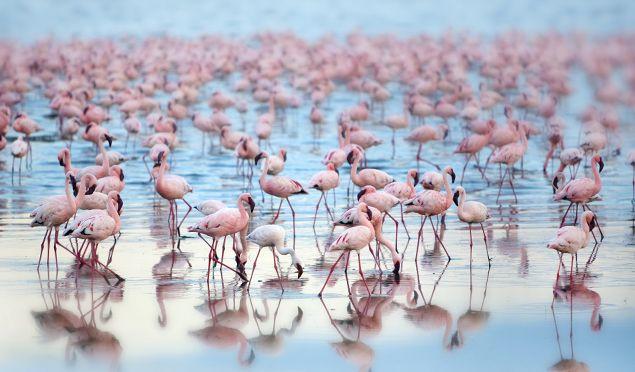 Kenya Facts - flamingoes