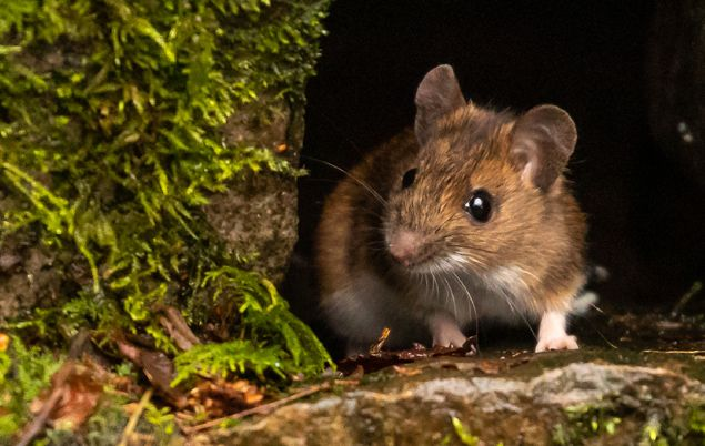 Ireland Facts - mouse