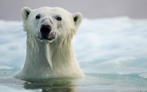 Interesting Facts About Polar Bears For Kids - Best Bear 2017