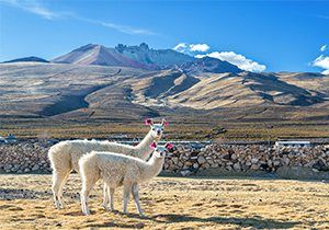 Bolivia Facts For Kids National Geographic Kids