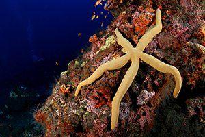 short essay on starfish