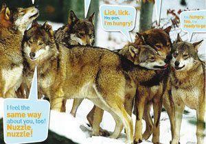 Wolf language and communication   National Geographic Kids
