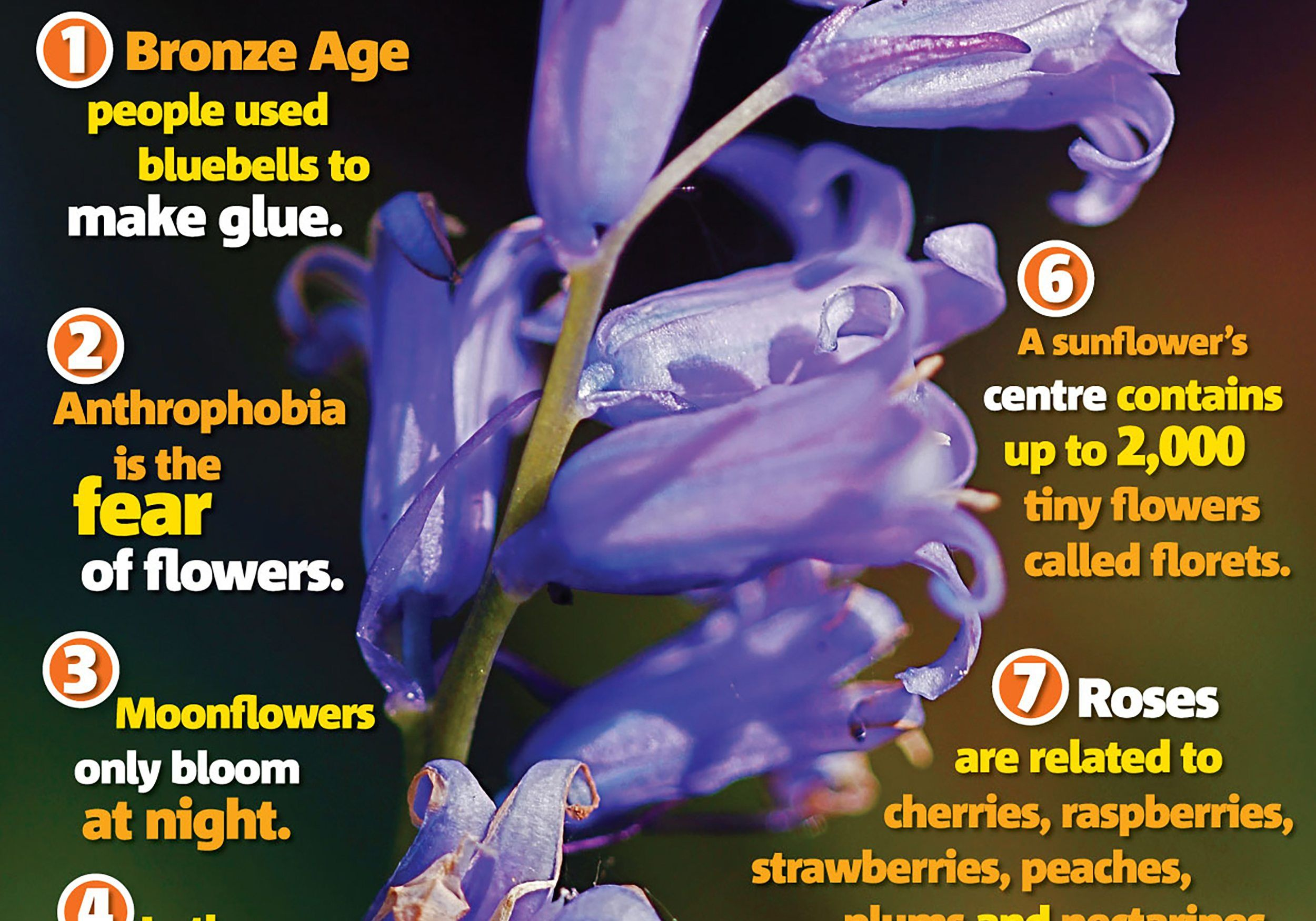 Flower Facts Science Primary Resource National Geographic Kids
