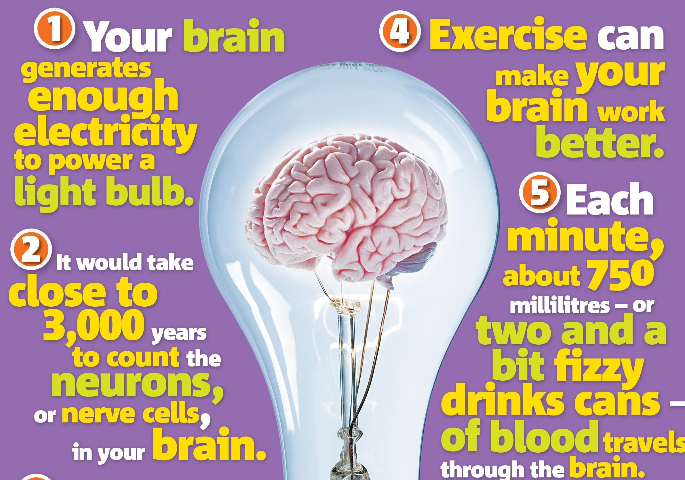 the brain  science primary resource