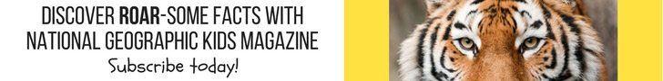 Subscribe leaderboard NZ