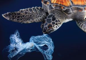 Plastic Pollution Primary Resource   National Geographic Kids