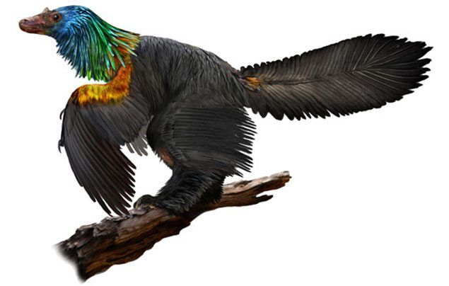 Rainbow dinosaur fossil discovered in China