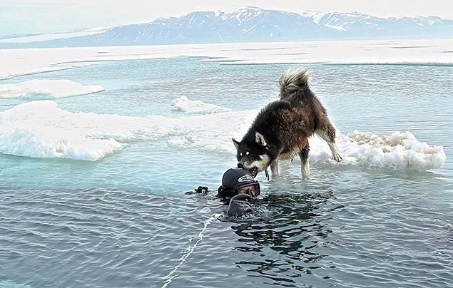 Paul Rose Dare To Explore Paul's dog lovingly nibbles his head when he surfaces from a dive