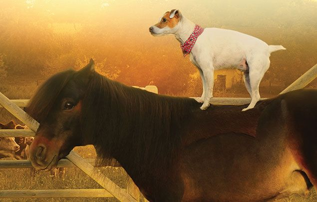 Unlikely Animal Friends National Geographic Wild: cute dog wearing a bandana standing on a pony's back