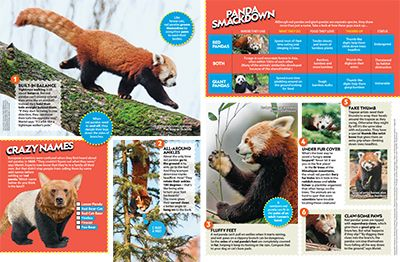 Red Panda Primary Resource