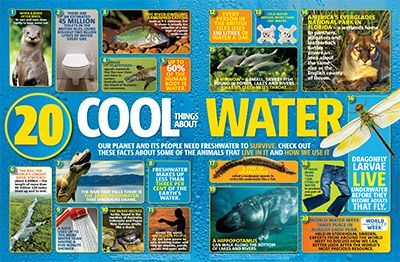 Water Facts Primary Resource