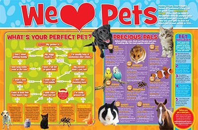 We Love Pets Primary Resource