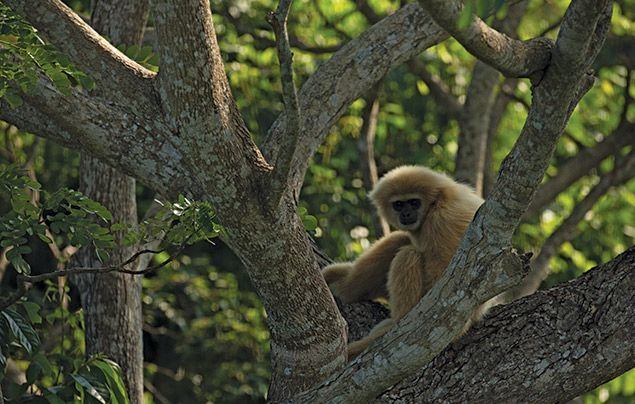 Hostile Planet: primate looks down from a tree