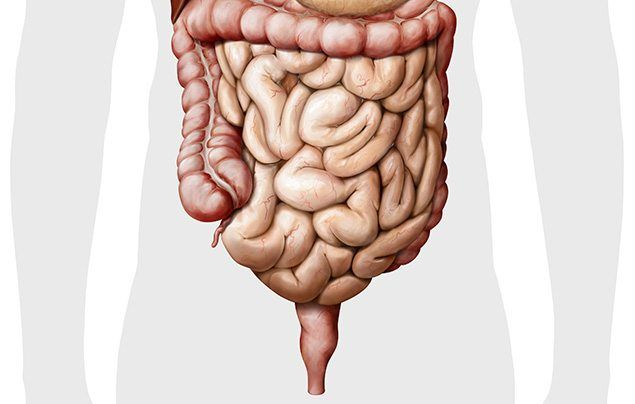 Human digestive system intestines illustration