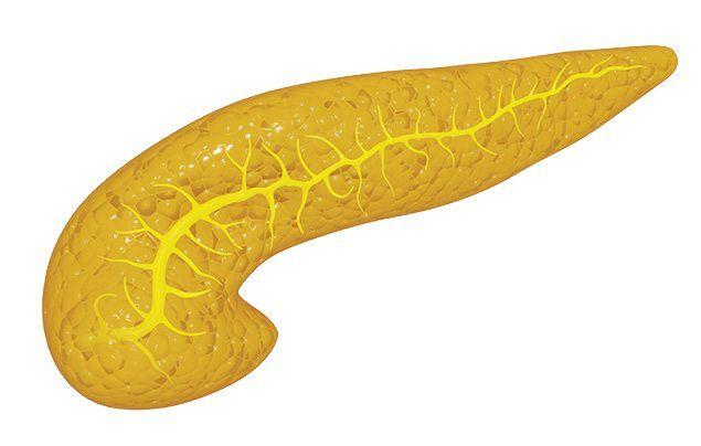 Human digestive system pancreas illustration