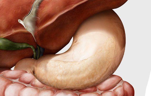 Human digestive system stomach illustration