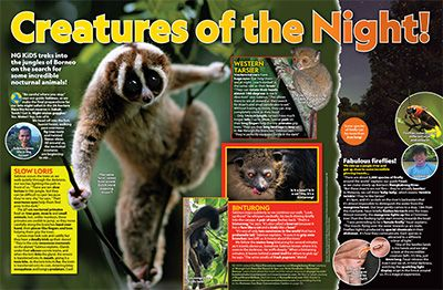 Nocturnal Creatures Primary Resource - Small Image