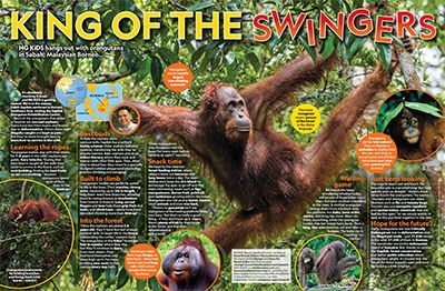 Orangutan Primary Resource - small image