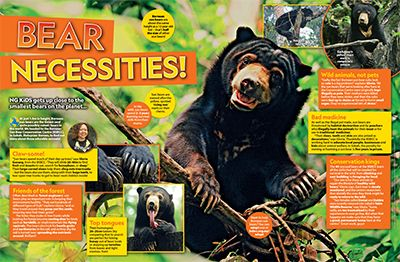 Sun Bear Primary Resource Small Image
