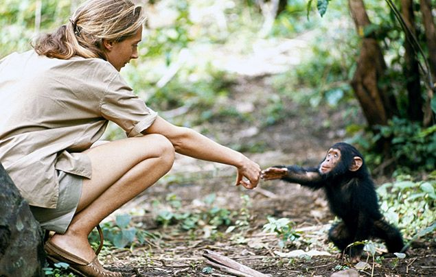Jane Goodall interview: Jane with chimp