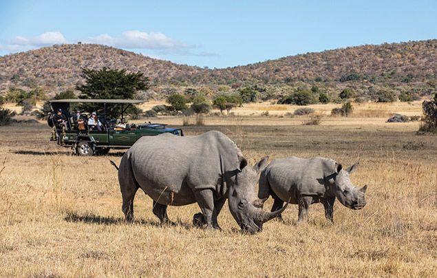 Safari Plains holiday competition