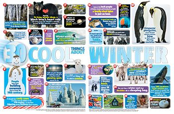 Winter Facts Primary Resource - Small image