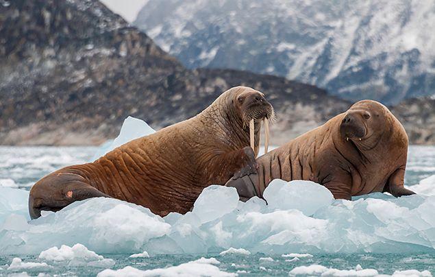 Polar habitat