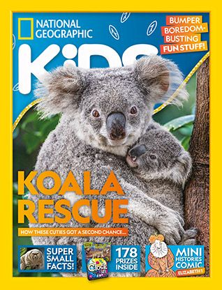 National Geographic Kids magazine: koala cover