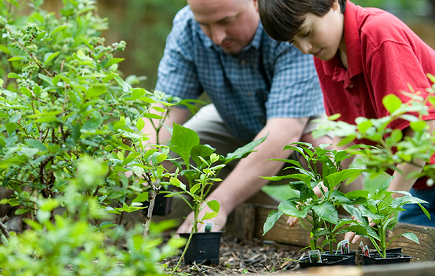 How to appreciate nature   Father and son gardening