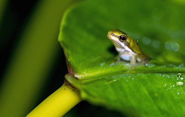 Frog Life Cycle | Tiny adult frog sits on leag