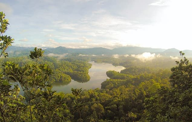 how to save the planet | a big view of pristine rainforest. a river runs through the middle and there are mountains in the background.