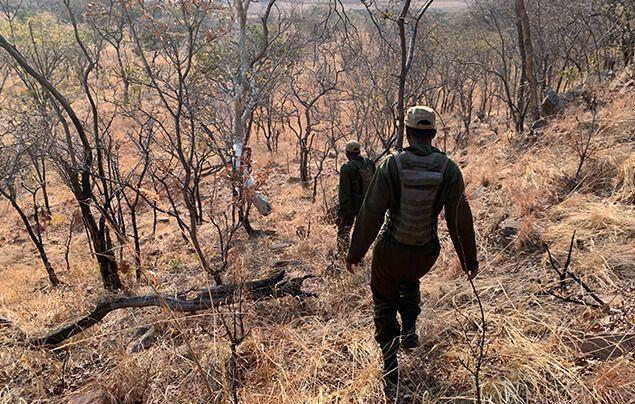 wildlife rangers walk through the savannah, heading downhill through some scrubland